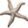 The Coastal Star